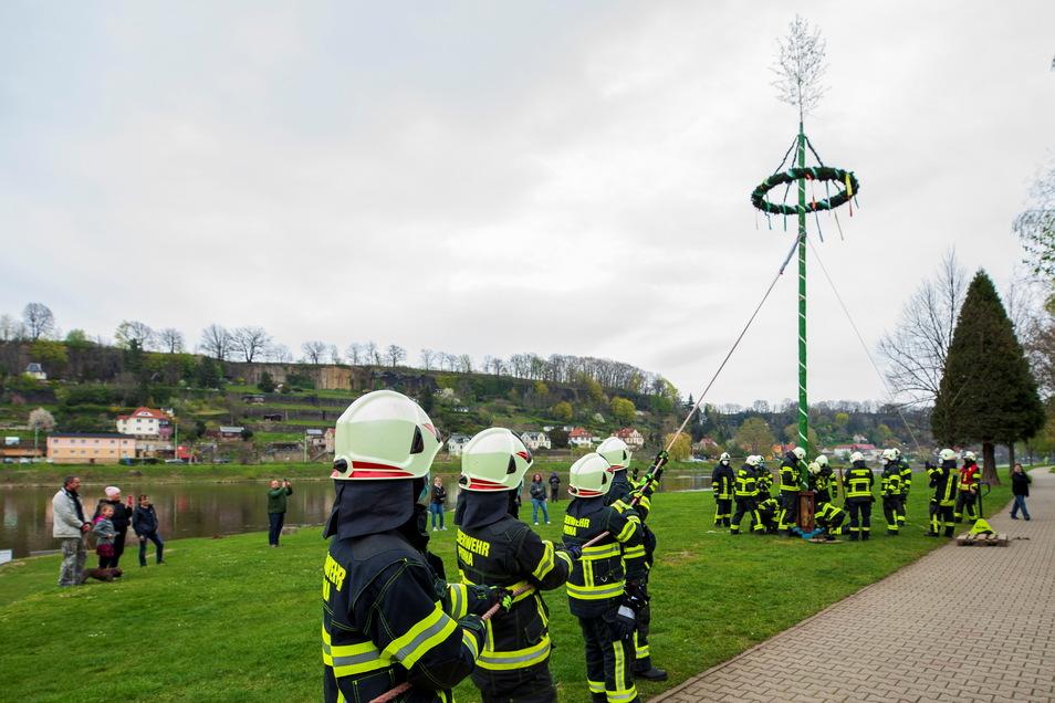 Die Feuerwehren der Stadt Pirna stellen Maibaum auf der Elbwiese auf. Auf Kommando des Einsatzleiters wurde der Baum aufgezogen.
