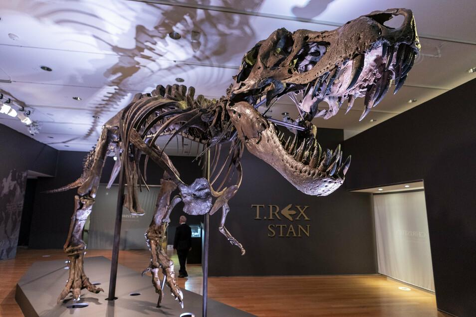 Stan, eines der größten und vollständigsten Fossilien des Tyrannosaurus Rex, das entdeckt wurde, ist im Auktionshaus Christie's zu sehen.