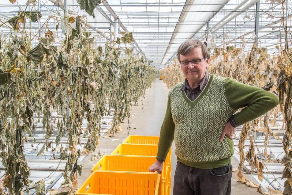 """""""Anfangs konnte ich hier gar nicht reingehen"""" - Rüdiger Ahr musste die wohl schwerste Entscheidung treffen, seit er 1991 den Gartenbaubetrieb Ahr in Tauchritz gegründet hat: die Ernte zerstören. Der Anblick danach ging ihm schwer an die Nieren."""