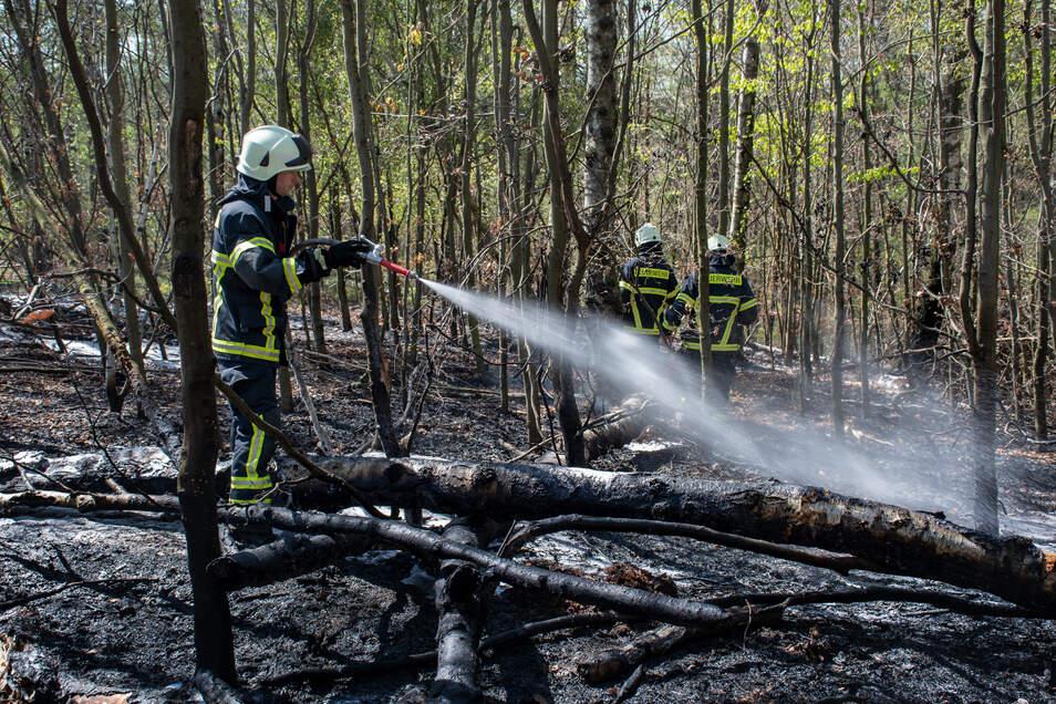 Mehr als 50 Kameraden mussten am Montag im Langenauer Wald zwischen Hartha und Geringswalde den Brand löschen. Doch auch in den Folgetagen war das Feuer noch immer nicht komplett bekämpft.