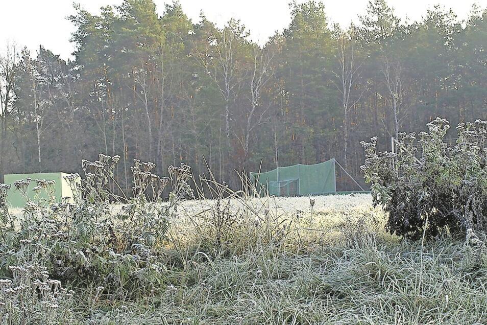 Hinter dem Schul- und Sportgelände der Oberschule Krauschwitz ist ein Teil des Krauschwitzer Kommunalwaldes und hier wurde der Waldumbau bereits begonnen.