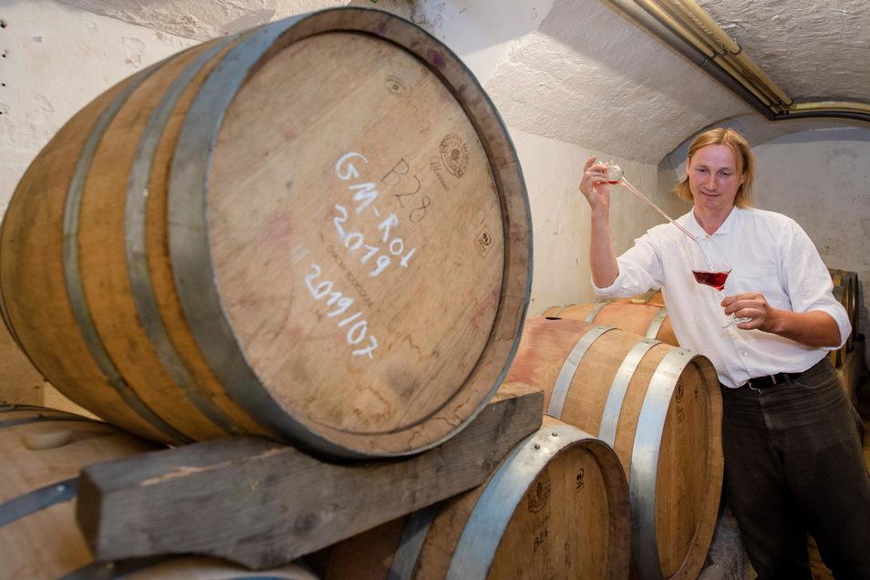 Der jetzige Lagerraum mit den Barriquefässern im früheren Kohlekeller unter dem Villengebäude ist zu klein. Dadurch kann der Wein nur eine begrenzte Zeit im Eichenfass reifen.