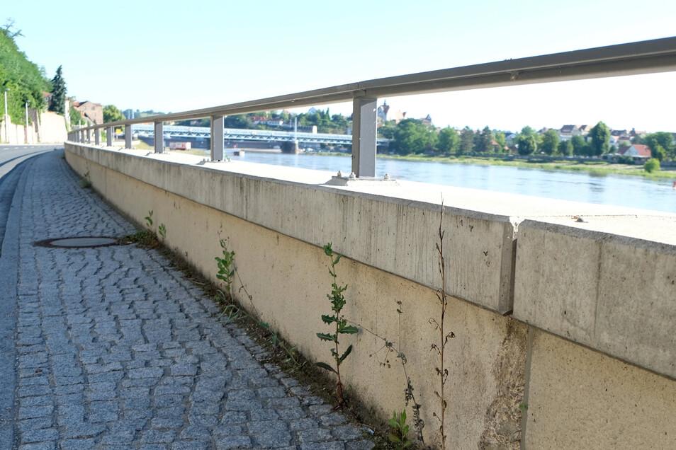 Der Beton der Hochwasserschutzwand entlang der Siebeneichener Straße in Meißen ist noch nicht so alt, aber trotzdem offenbar bereits schadhaft.