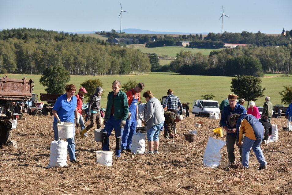 Wenn die Kartoffeläcker zur Selbst lese freigegeben sind, ist das jedes Jahr ein Ereignis, hier im vergangenen September in Liebenau.