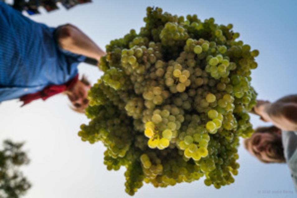 Radebeul und Meißen feiern ihre Weinfeste - wenn auch ein bisschen anders als sonst.