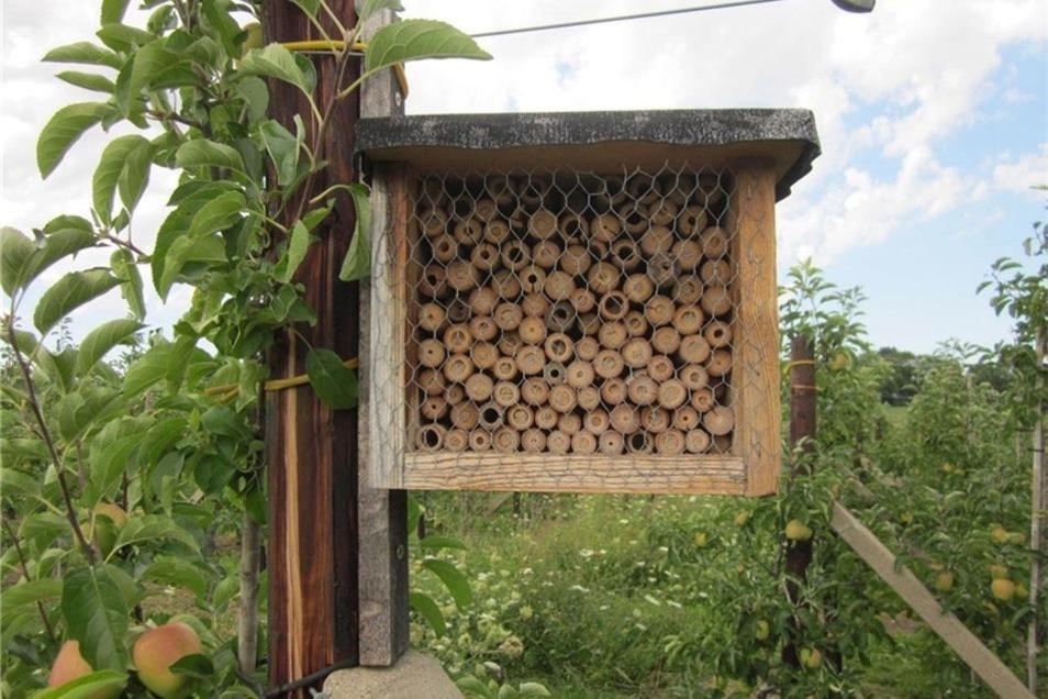 Auch Bruthilfen für Insekten sollen dabei helfen.
