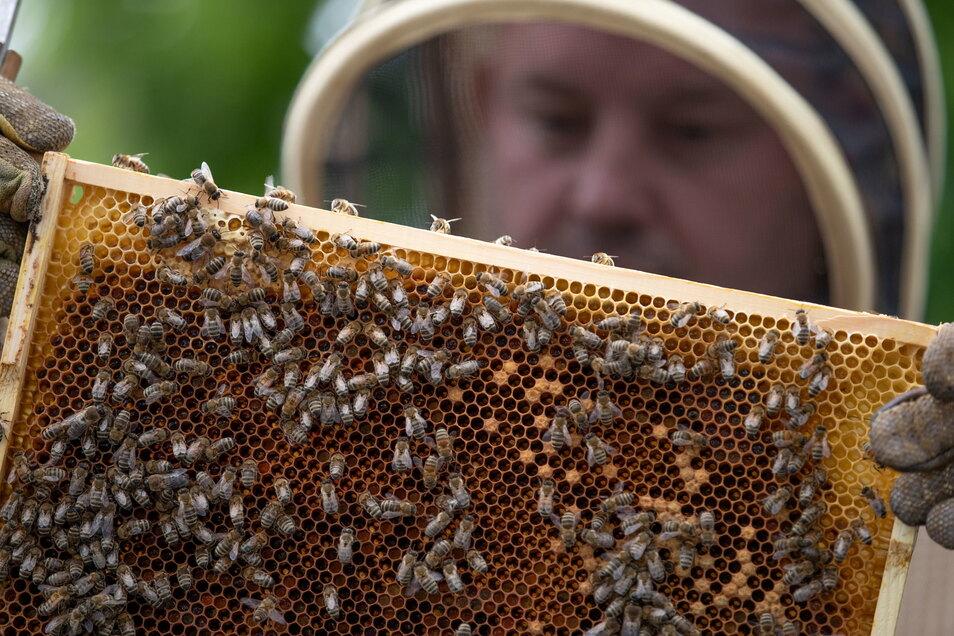 Deutschlands Imker haben in diesem Jahr deutlich weniger Honig eingeholt als in den Vorjahren.