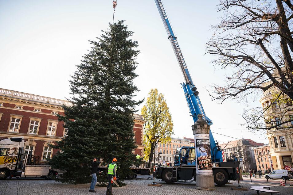 Mit einem Gewicht von 4,5 Tonnen stellte der Weihnachtsbaum auf dem Platz der Friedlichen Revolution bei der Frauenkirche 2020 eine Herausforderung für die Aufsteller dar.