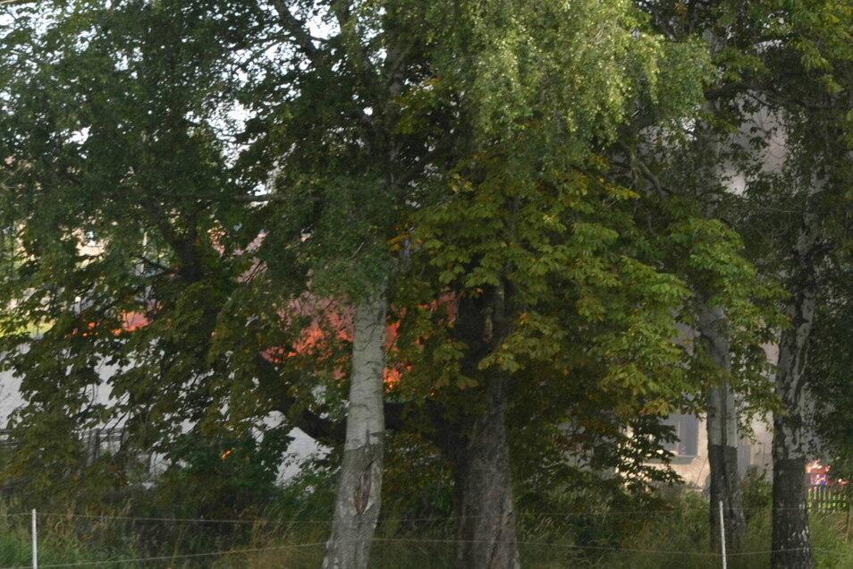 Glutrot leuchten die Flammen hinter den Bäumen.
