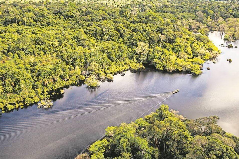 Im Regenwald am Amazonas leben mehr als die Hälfte aller Tier- und Pflanzenarten der Erde. Fotos: dpa