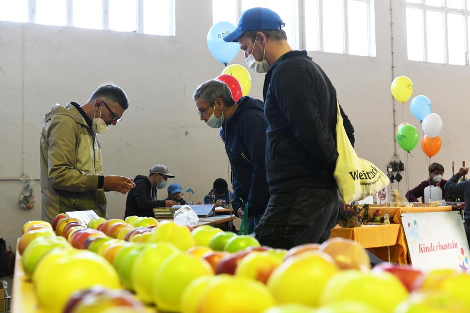 Pomologe und Obstsortenexperte Roland Lebe bestimmte beim Apfeltag in Leisnig die von den Besuchern mitgebrachten Apfelsorten.
