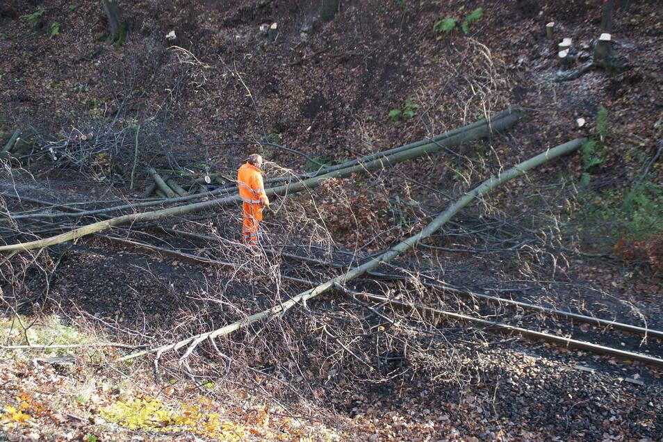 In den vergangenen Tagen hat eine Firma auf der Strecke in der Nähe des Bahnhofes Kurort Oybin-Niederdorf Bäume gefällt und Sträucher entfernt.