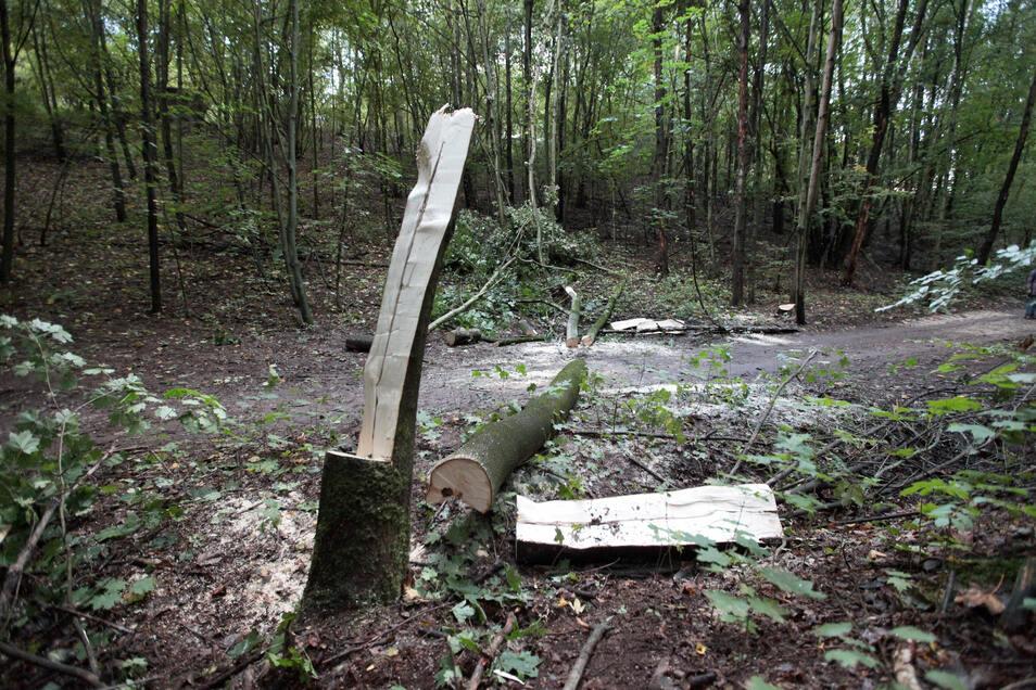 Vom Baum erschlagen: Ein 46-Jähriger starb am Sonnabend im Breiten Grund in Freital.