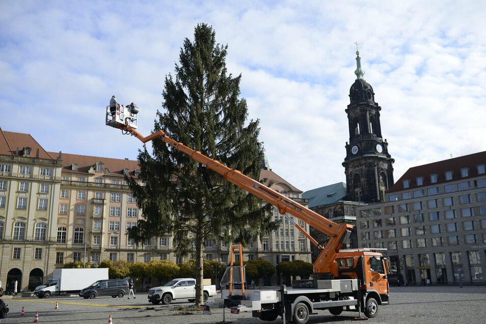 Am Dienstag wurde die drei Kilometer lange Lichterkette um den neuen Baum gelegt.