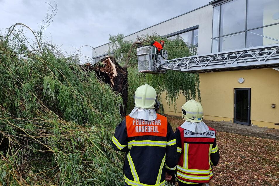 Diese gewaltige Weide ist an der Stadtgrenze von Radebeul zu Coswig auf ein Bürohaus gestürzt.