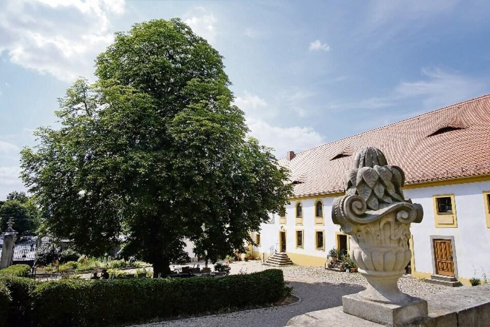 Diese prächtige Kastanie steht vor einem ehemaligen Wirtschaftsgebäude von Schloss Seußlitz, heute beschirmt sie die dortige Gaststätte.