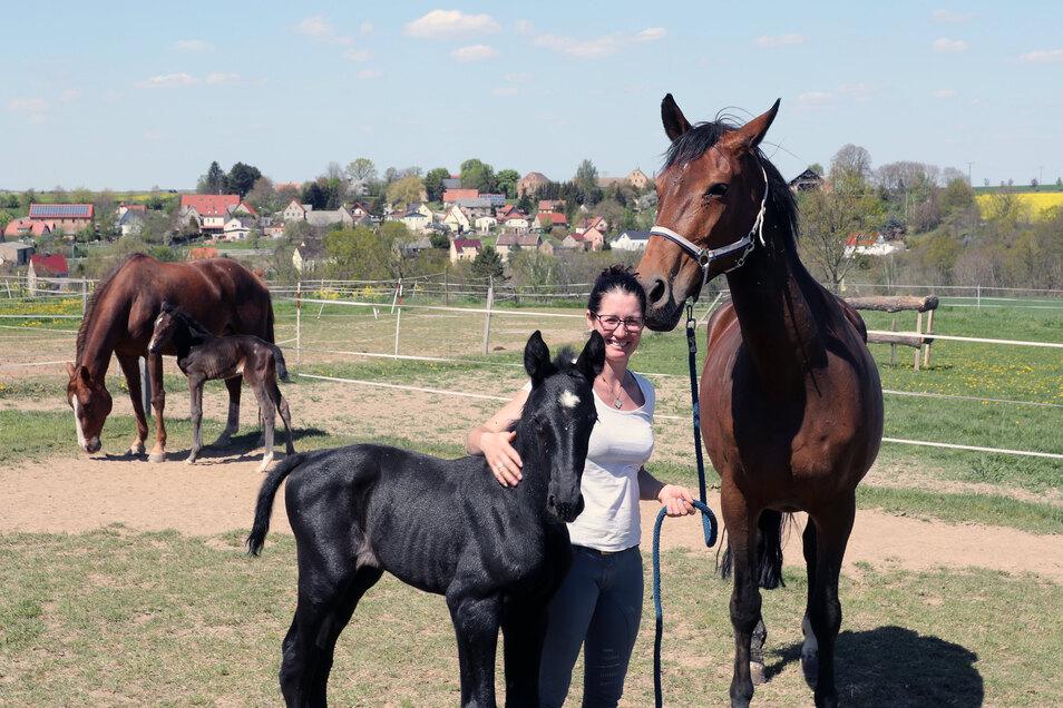 """Während Ellen Kölz in der Tautendorfer Pferdeidylle den kleinen Hengst hält, schaut """"Ersatz-Mama"""" Aragonessa ganz genau, was mit dem Nachwuchs passiert."""