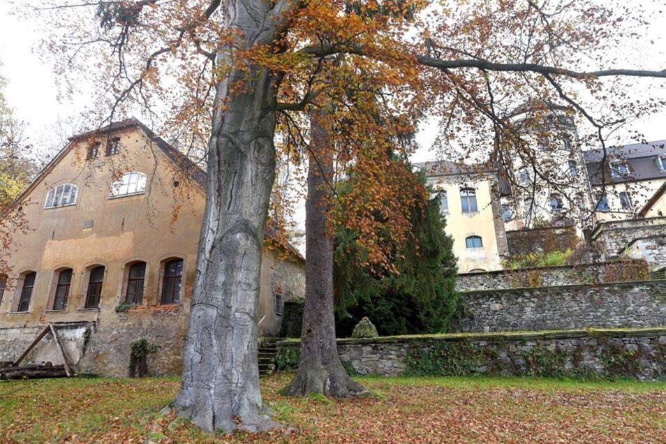 Wegen Umsturzgefahr werden im Schlossgarten 2016 noch eine Blutbuche und eine Fichte gefällt.