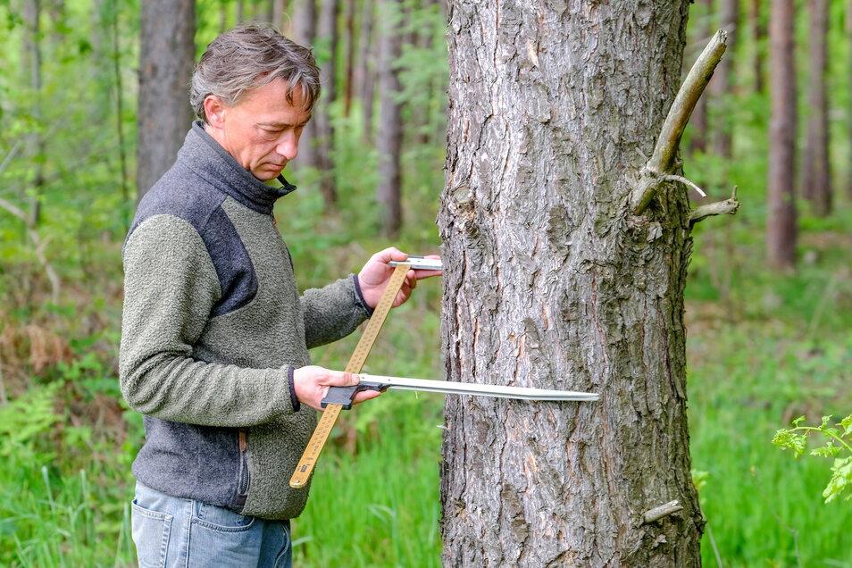 So werden die Maße eines Baumstammes ermittelt. Daniel von Sachsen zeigt es. Der Waldbesitzer und -bewirtschafter nutzt dafür eine sogenannte Messkluppe.