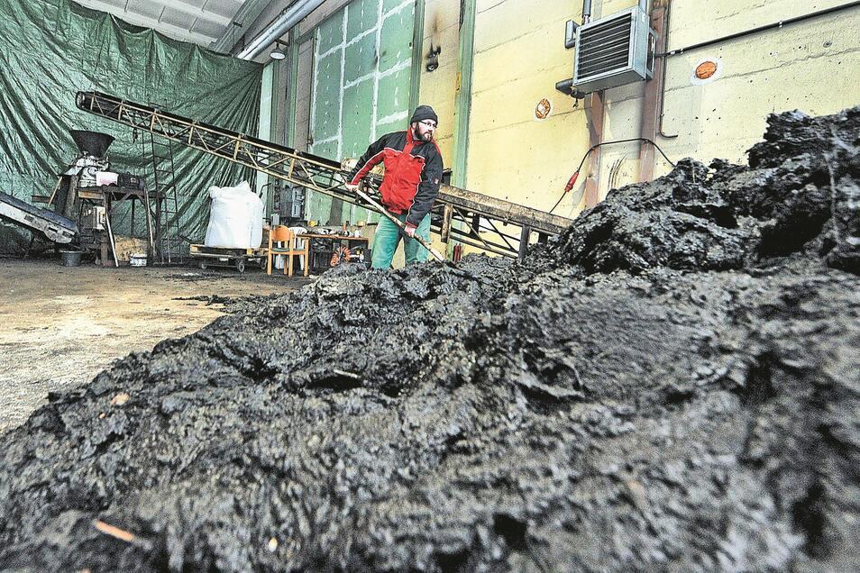 Mooraufbereitung beginnt mit Grobreinigung durch Maik Lehnigk (Haus-und Gartenservice Jürs), der feste Bestandteile aussortiert, bevor alles zur Mühle geht.