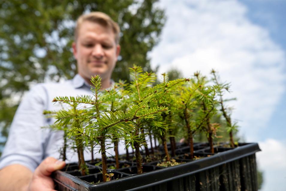Bereit für den Wald: Sachsenforst-Sprecher Renke Coordes mit einer Batterie etwa dreijähriger Weißtannen.