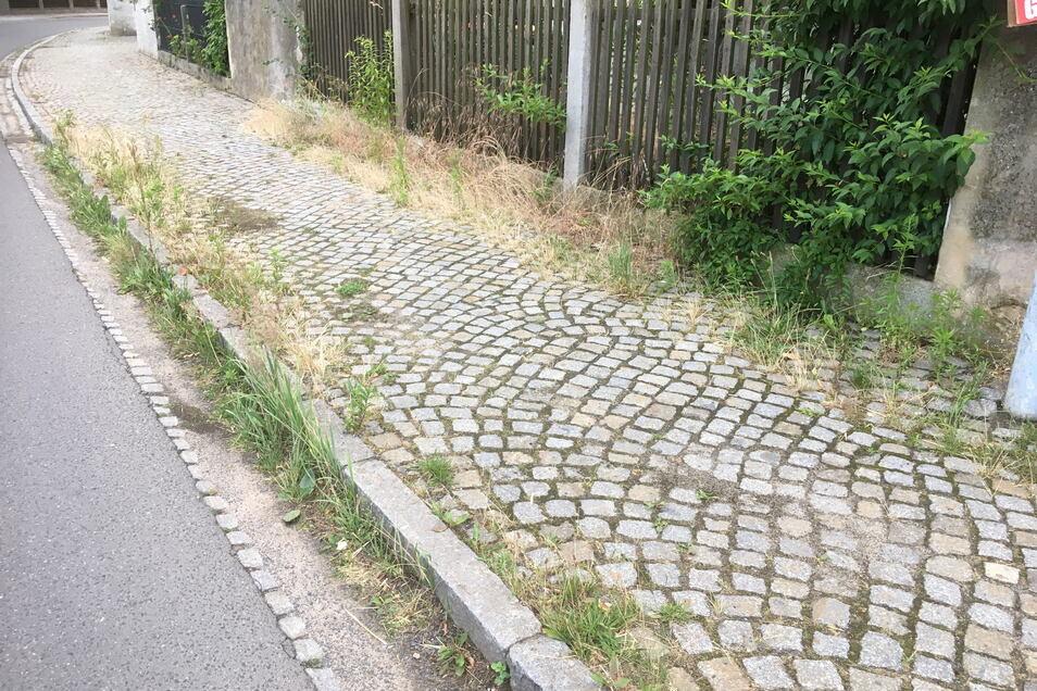Über dieses Unkraut am Straßenrand ärgern sich Ebersbacher Nachbarn - und die Gemeindeverwaltung.