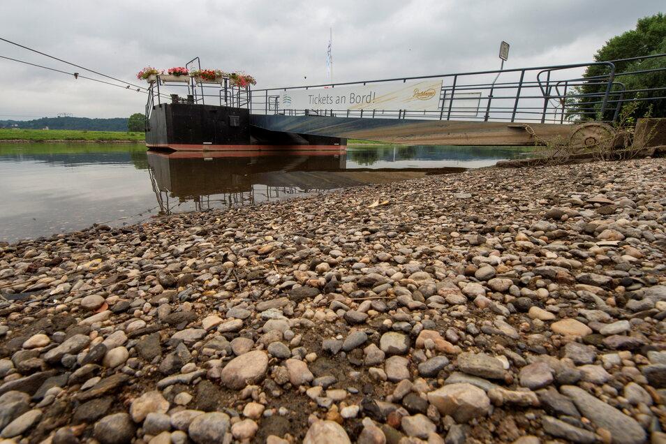 Dampferanlagestelle Radebeul: Noch ist genügend Platz in der Elbe. Die Wassermenge aus Tschechien ist entscheidend.