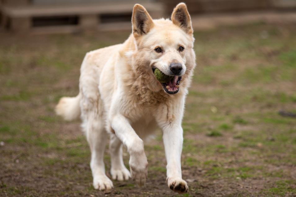 Ungezügelte Freude: Hunde können sich in Pirna jetzt auch leinenlos austoben - an bestimmten Orten.