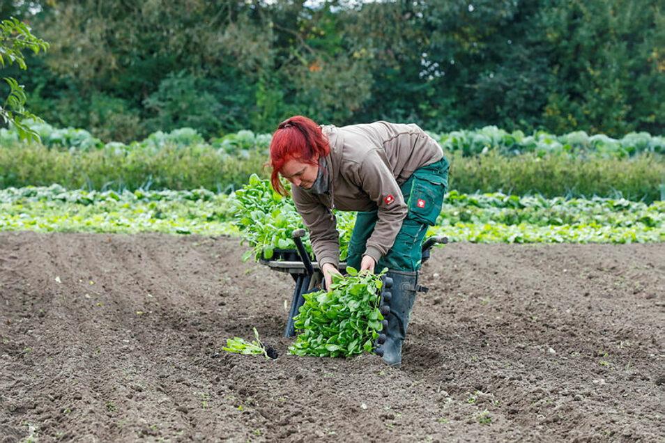 Peggy Schostek pflanzt Spinat. Nach dem plötzlichen Tod ihres Mannes muss sie ihre Biogärtnerei allein bewirtschaften.