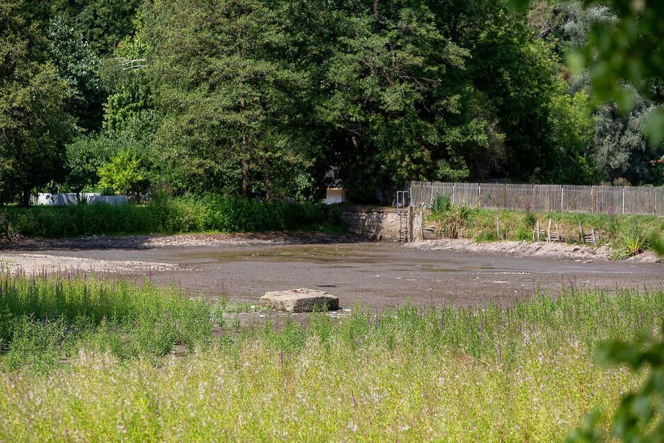 Der Wasserspiegel vom Rölligteich in Dippoldiswalde war so sehr gesunken, dass Sauerstoffmangel herrschte. Der Eigentümer ließ den Teich daraufhin ab, damit die Fische in die Weißeritz flüchten konnten. Doch diese gruben sich panisch in den Schlamm ein. Das Technische Hilfswerk rettete die Tiere daraufhin und setzte die Fische in die Weißeritz um.