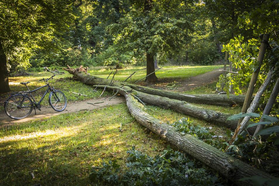 Quer überm Weg gelandet: Ein Linde im Stadtpark hatte anscheinend nicht mehr genug Halt im Boden und wurde wohl vom Sturm umgeweht.