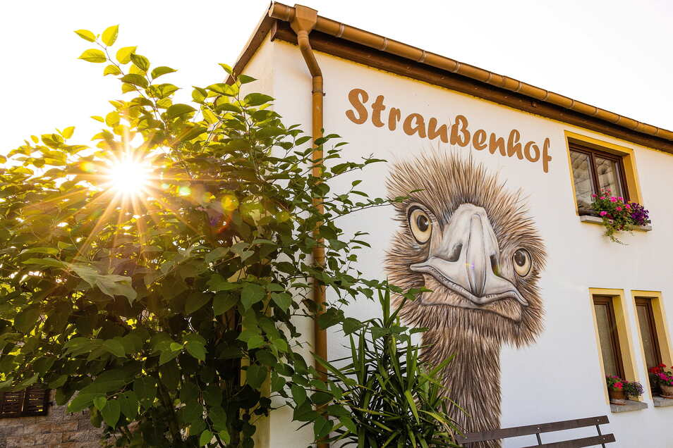Das Sprühbild eines Straußes ist nicht zu übersehen am Straußenhof Striegistal, der im Wandergebiet Striegistäler liegt. Von hier aus lassen sich herrliche Rundwanderungen unternehmen. Auch einen Camper-Stellpatz gibt es auf dem Hof sowie weitere Tiere wi