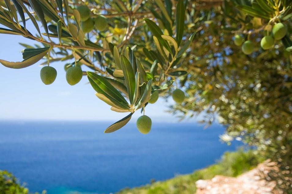 Lassen Sie sich vom mediterranen Lebensgefühl verzaubern.