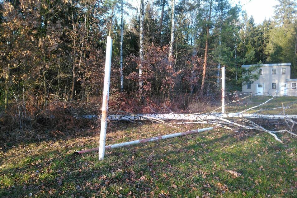 Diese Birke zerstörte eines der beiden Tore auf dem Hirschbacher Sportplatz.