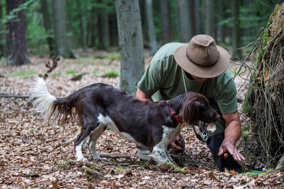 """Hundeführer Laurent Heimen mit seinem Münsterländer """"Qesra"""" bei der Ausbildung zum Kadaverspürhund."""