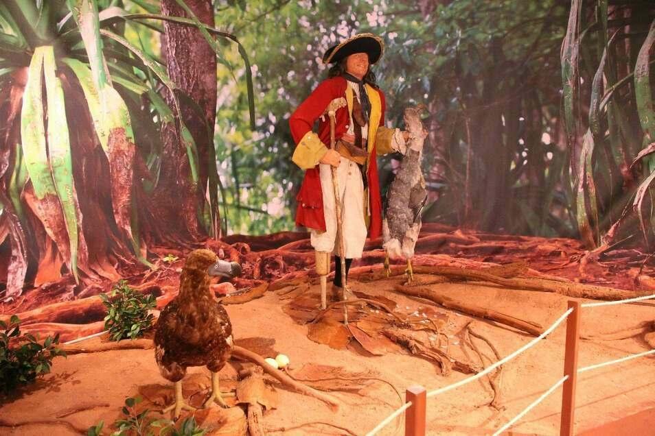 """Ein Pirat treibt im Senckenberg Museum sein Unwesen – in der Ausstellung """"Tot wie ein Dodo"""""""