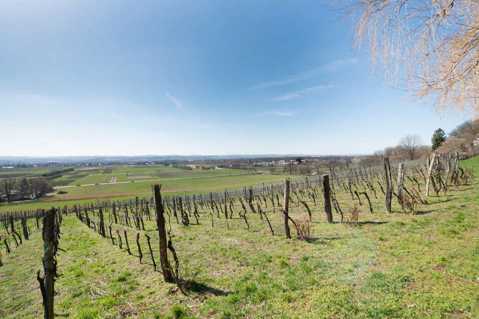 Ein Blick auf das mögliche Abbaugebiet rund um Söbrigen vom Pillnitzer Weinberg aus.