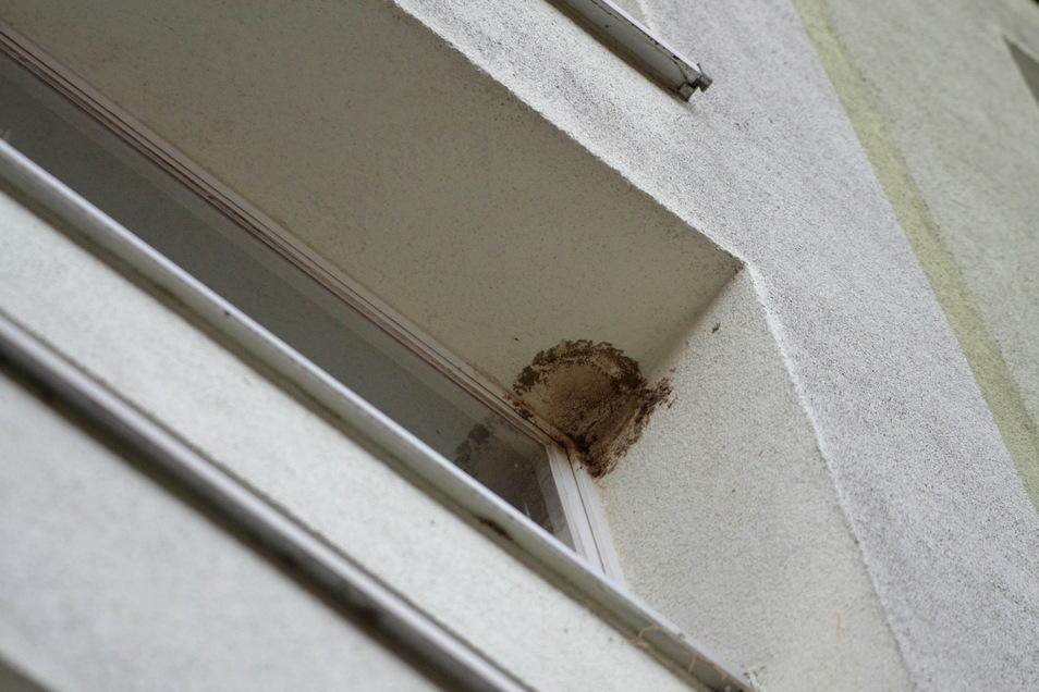Das Schwalbennest am Hausflurfenster wurde entfernt. Von wem, ist nicht sicher. Das kann eine hohe Geldbuße nach sich ziehen.