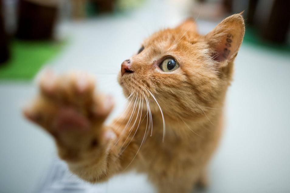 Im Tierheim Pirna werden viele Katzen vermittelt. Corona schafft Einsamkeit. Mensch und Tier rücken deshalb näher zusammen.