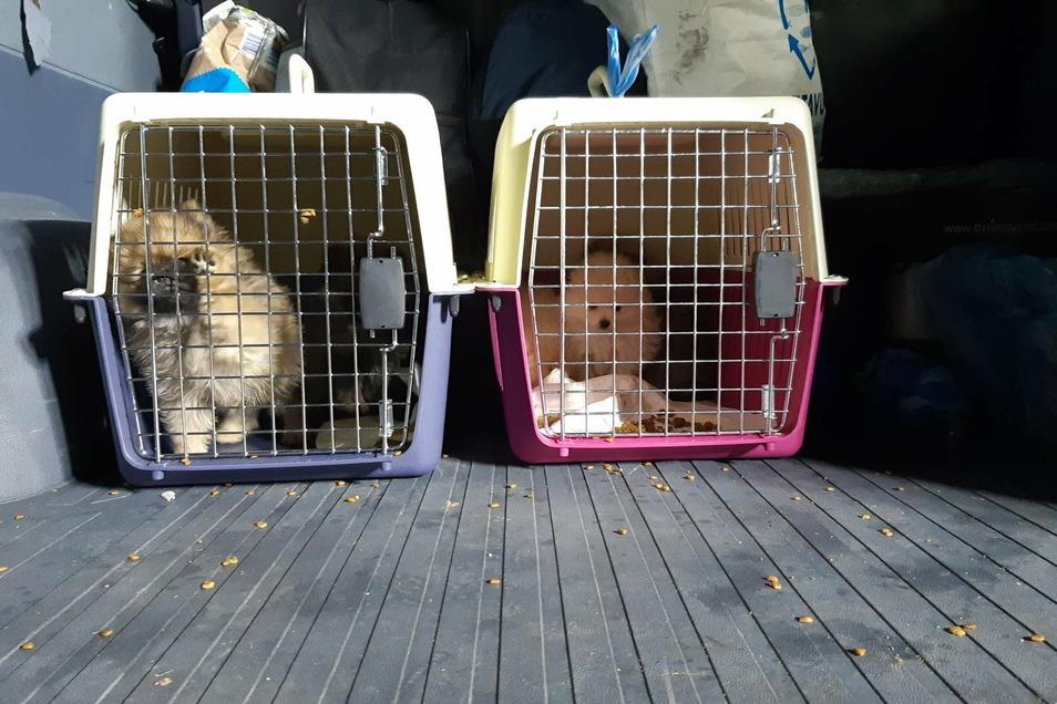 Zwei der fünf geschmuggelten Hundewelpen im Kofferraum des bulgarischen Transporters, der auf der A17 kontrolliert wurde.