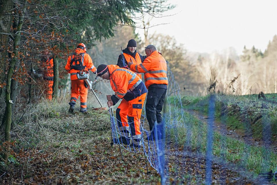 An der Grenze zu Polen sollen Zäune gegen die Ausbreitung der Schweinepest helfen.