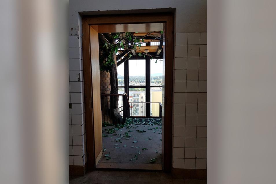 ... in einem anderen verliert ein künstlicher Baum seine Blätter...