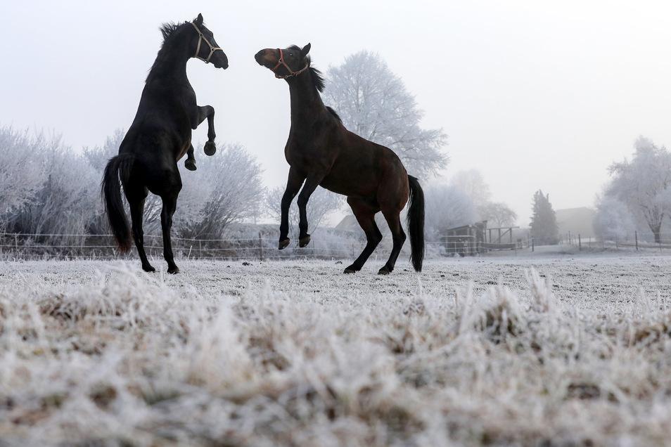 In Sachsen leben 6.500 Menschen von den Pferden.