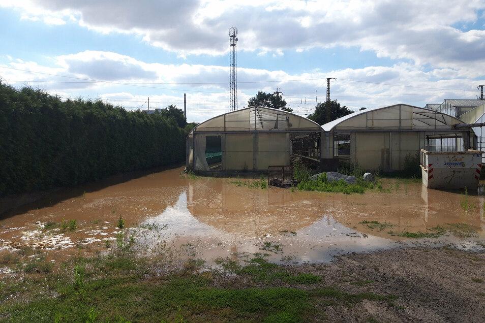Das Gelände der Hortensiengärtnerei Ullmann wird geflutet