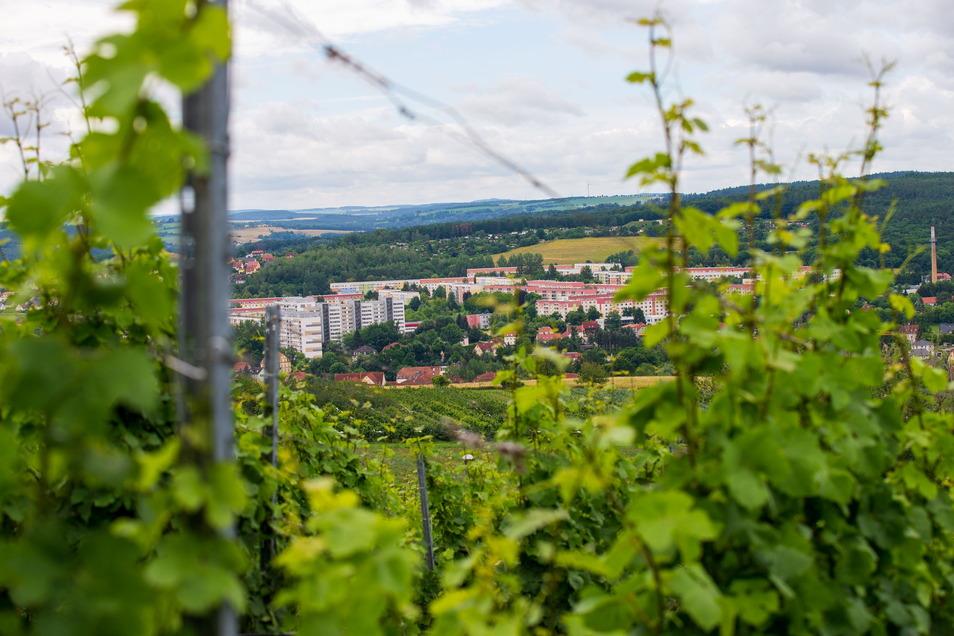 Einer von Freitals schönsten Blicken: Die Aussicht vom Pesterwitzer Weinberg reicht weit hinein ins Osterzgebirge.