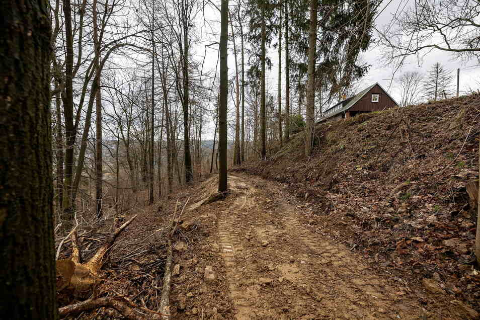 In der Nähe des Glashütter Jugendklubs am Folgenhang wurden Bäume gefällt, um einen Weg wieder herzustellen. Einigen gefällt das nicht.