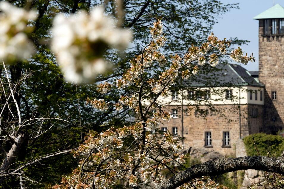 Mit einem großen Fest wurde vor 95 Jahren die Jugendburg Hohnstein eingeweiht.