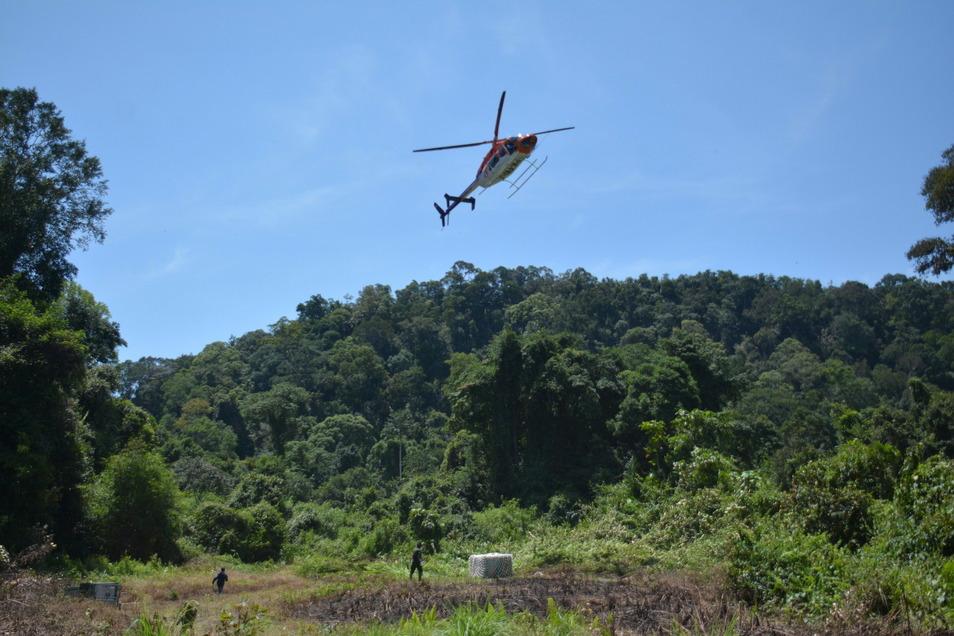 Um die Auswilderungsgebiete möglichst schnell zu erreichen, wurden die Menschenaffen per Helikopter in den Dschungel Borneos geflogen.