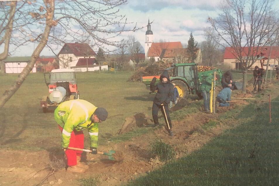 Der Reinersdorfer Heimatverein pflanzte vor der Coronasperre Bäume und Sträucher und auch eine neue Sängerlinde.