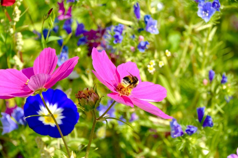 Bei LandMAXX erhalten Sie mit dem Bienenhaus die ideale Unterkunft – dann braucht es nur noch bienenfreundliche Pflanzen und Blumen in der Umgebung.